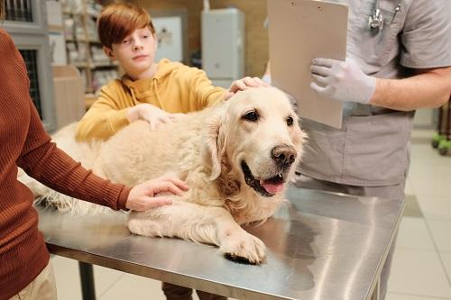 des soins oculaires pour les chiens